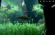 LIFE HACK: Aquard.io